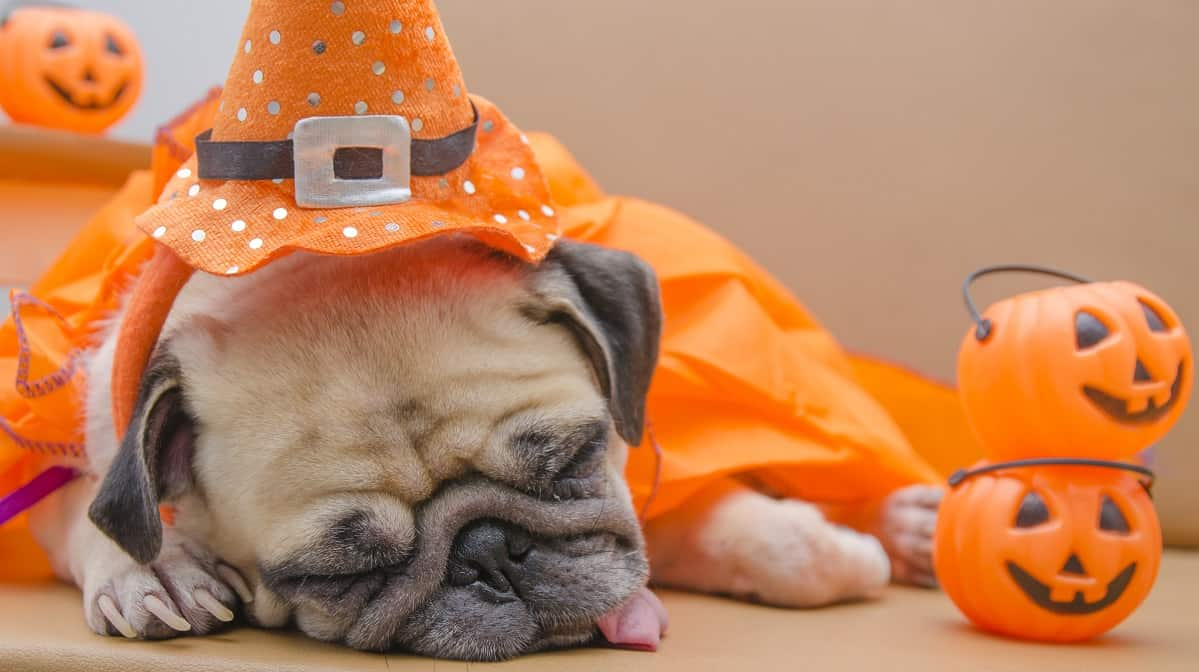 Don't Overdo the Sweets on Halloween